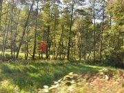Prodej lesa, Chýstovice - Jedlina