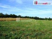Prodej pozemku pro bydlení, Nový Jáchymov